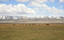 Όμορφος ο φυσικός από Bishkek σε Naryn με τα βουνά Tian Shan του Κιργιστάν Στοκ φωτογραφία με δικαίωμα ελεύθερης χρήσης
