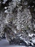 όμορφος παγωμένος κλάδος δέντρων, χειμερινό δέντρο στο πάρκο Στοκ φωτογραφίες με δικαίωμα ελεύθερης χρήσης