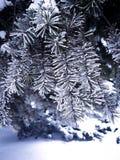 όμορφος παγωμένος κλάδος δέντρων, χειμερινό δέντρο στο πάρκο Στοκ Εικόνες