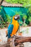 όμορφος παπαγάλος Στοκ Φωτογραφία