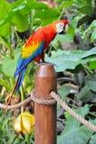 όμορφος παπαγάλος Στοκ εικόνα με δικαίωμα ελεύθερης χρήσης