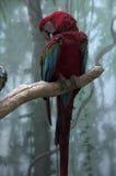 Όμορφος παπαγάλος Στοκ Εικόνα