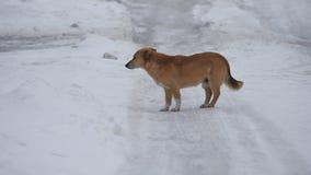Όμορφος περίπατος σκυλιών μακριά το χειμερινό βράδυ τα τρεξίματα σκυλιών μακριά στο χιόνι στο δρόμο υπαίθρια φιλμ μικρού μήκους