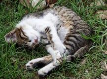 Όμορφος περιπλανώμενος ύπνος γατών στοκ εικόνες με δικαίωμα ελεύθερης χρήσης