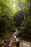Όμορφος ποταμός βουνών τοπίων της Σλοβακίας ποταμών βουνών sunse Στοκ εικόνα με δικαίωμα ελεύθερης χρήσης