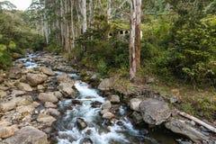 Όμορφος ποταμός στην ανθοδέσμη Στοκ Εικόνα