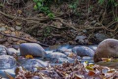 Όμορφος ποταμός στη Βενεζουέλα στοκ εικόνες