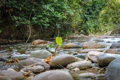 Όμορφος ποταμός στη Βενεζουέλα στοκ φωτογραφία με δικαίωμα ελεύθερης χρήσης