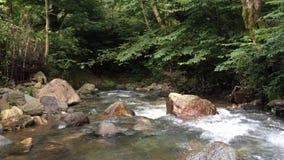 Όμορφος ποταμός στο Ιράν, gilan rasht λίγο τρεμάμενο βίντεο κομματιών απόθεμα βίντεο