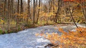 Όμορφος ποταμός φαραγγιών Oirase που η εποχή φθινοπώρου, Ιαπωνία απόθεμα βίντεο