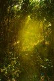 Όμορφος πράσινος δασικός θερμός Στοκ εικόνα με δικαίωμα ελεύθερης χρήσης