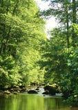 όμορφος πράσινος ποταμός Στοκ Φωτογραφίες