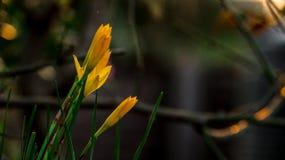 Όμορφος πυροβολισμός κινηματογραφήσεων σε πρώτο πλάνο λουλουδιών στοκ εικόνα