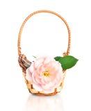 Όμορφος ρόδινος αυξήθηκε λουλούδι στο καλάθι,   Στοκ φωτογραφίες με δικαίωμα ελεύθερης χρήσης