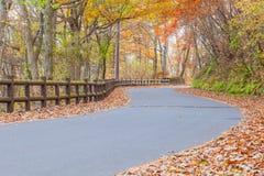 Όμορφος δρόμος επαρχίας με το δέντρο φθινοπώρου Στοκ εικόνες με δικαίωμα ελεύθερης χρήσης