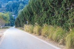 Όμορφος δρόμος με το δέντρο πεύκων Στοκ φωτογραφία με δικαίωμα ελεύθερης χρήσης