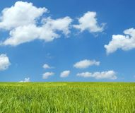 όμορφος σίτος πεδίων xxl Στοκ φωτογραφία με δικαίωμα ελεύθερης χρήσης