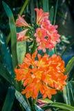 Όμορφος, τεράστιος, κόκκινος εξωτικός στενός επάνω λουλουδιών στοκ εικόνα με δικαίωμα ελεύθερης χρήσης
