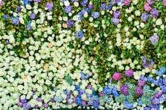 Όμορφος τοίχος λουλουδιών Στοκ εικόνες με δικαίωμα ελεύθερης χρήσης