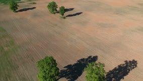 Όμορφος τομέας καλλιεργήσιμου εδάφους με τις παλαιές βαλανιδιές την άνοιξη, εναέριες απόθεμα βίντεο