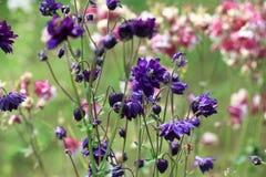 Όμορφος τομέας λιβαδιών με τα άγρια λουλούδια Κινηματογράφηση σε πρώτο πλάνο wildflowers άνοιξης ή καλοκαιριού θολωμένο ανασκόπησ Στοκ Εικόνα