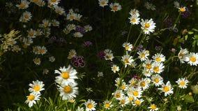 Όμορφος τομέας λιβαδιών με τα άγρια λουλούδια φιλμ μικρού μήκους