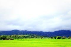Όμορφος τομέας ρυζιού άποψης στοκ φωτογραφία με δικαίωμα ελεύθερης χρήσης