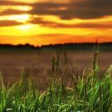 Όμορφος τομέας στο ηλιοβασίλεμα στοκ εικόνα