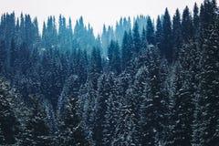 Όμορφος τονισμός χρώματος βουνοπλαγιών πεύκων δασικός Στοκ εικόνες με δικαίωμα ελεύθερης χρήσης