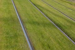 όμορφος τραμ τρόπος χλόης ραγών πράσινος Στοκ Φωτογραφία