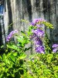 Όμορφος τρόπος ζωής κήπων λουλουδιών φωτογραφίας Στοκ Φωτογραφίες