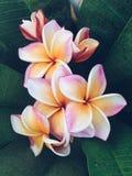 Όμορφος τρύγος λουλουδιών τυποποιημένος στοκ εικόνα