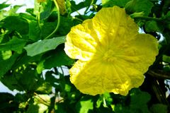 Όμορφος των κίτρινων λουλουδιών στοκ εικόνες με δικαίωμα ελεύθερης χρήσης