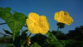 Όμορφος των κίτρινων λουλουδιών στοκ φωτογραφία με δικαίωμα ελεύθερης χρήσης