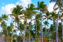 Όμορφος φοίνικας μια ηλιόλουστη ημέρα σε Punta Cana Στοκ φωτογραφίες με δικαίωμα ελεύθερης χρήσης