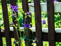 Όμορφος φράκτης υποβάθρου κουδουνιών λουλουδιών Στοκ εικόνα με δικαίωμα ελεύθερης χρήσης