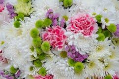 Όμορφος φρέσκος αυξήθηκε και το ρόδινο λουλούδι ορχιδεών Στοκ Εικόνα
