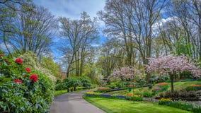 Όμορφος φρέσκος ζωηρός κήπος λουλουδιών στοκ φωτογραφία με δικαίωμα ελεύθερης χρήσης