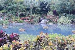 Όμορφος φωτεινός εξωτικός τροπικός ζωηρόχρωμος κήπος στοκ φωτογραφίες με δικαίωμα ελεύθερης χρήσης