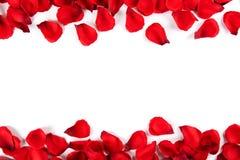 Όμορφος φωτεινός κόκκινος αυξήθηκε πέταλα, ρομαντική χειρονομία, υπόβαθρο Ευτυχής βαλεντίνων έννοια πωλήσεων ημέρας oliday στοκ εικόνα