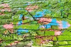 Όμορφος φλοιός σύστασης ενός αιώνιου δέντρου Στοκ φωτογραφία με δικαίωμα ελεύθερης χρήσης