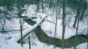 Όμορφος χειμερινός κολπίσκος κατά τη χιονώδη δασική, ευρεία άποψη άνωθεν απόθεμα βίντεο