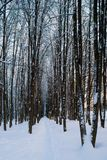 Όμορφος χειμώνας πιό forrest Στοκ Φωτογραφίες