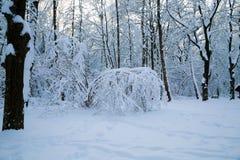Όμορφος χειμώνας πιό forrest Στοκ Εικόνες