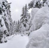 όμορφος χειμώνας τοπίων Στοκ Εικόνες