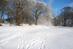 Όμορφος χειμώνας Στοκ φωτογραφία με δικαίωμα ελεύθερης χρήσης