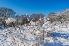 Όμορφος χειμώνας Στοκ Εικόνες