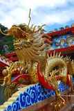όμορφος χρυσός δράκων στοκ εικόνα με δικαίωμα ελεύθερης χρήσης