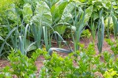 Όμορφος ecologic οργανικός κήπος Στοκ φωτογραφίες με δικαίωμα ελεύθερης χρήσης