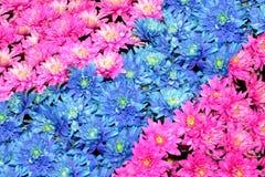 όμορφος floral ανασκόπησης Στοκ Φωτογραφία